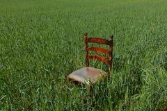 Sedia di mogano con un sedile dorato su un giacimento di grano verde fotografie stock libere da diritti