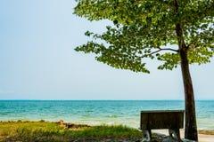 Sedia ed albero soli sulla spiaggia Immagini Stock
