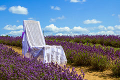 Sedia nel campo del lavander Fotografia Stock Libera da Diritti
