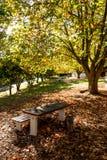 Sedia nella stagione di autunno del parco Fotografia Stock