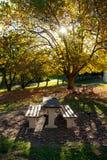 Sedia nella stagione di autunno del parco Immagine Stock