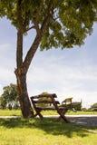 Sedia sotto l'albero fotografia stock libera da diritti
