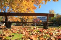Sedia sotto l'albero in autunno a Basilea Fotografia Stock