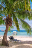 Sedie di spiaggia sotto una palma sulla spiaggia tropicale Immagini Stock
