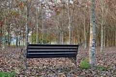 Sedie nel giardino ai rai Chern Tawan Fotografia Stock Libera da Diritti