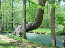 Sedile dell'albero Fotografia Stock