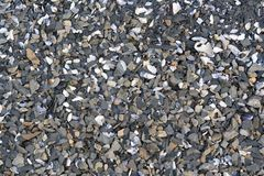 Sediment stone shells beach Royalty Free Stock Image