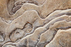 Sedimentary rock background. Or backdrop Stock Photos