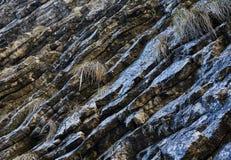 Sedimentary rocks background Stock Image