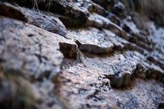 Sedimentary rocks background Royalty Free Stock Photos