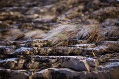 Sedimentary rocks background Stock Images