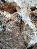 Sedimentary rocks with marine fossils Stock Images