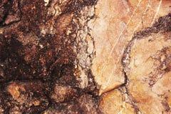 sedimentary textur f?r r?d rock r?tt lantligt stenar textur Bakgrund Natur royaltyfria foton