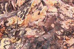 sedimentary textur f?r r?d rock r?tt lantligt stenar textur Bakgrund Natur royaltyfri foto