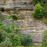 Sedimentary vaggar nyazeeländskt royaltyfri foto