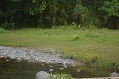 Sedimente auf der Seite des Flusses Stockfotografie