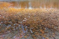 Sedimentos do rio Foto de Stock