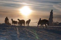 在长Sedivacek的足迹的Dogsled  免版税图库摄影