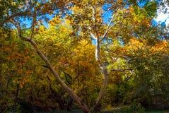 Sedona亚利桑那美国秋天颜色 图库摄影
