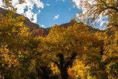 Sedona亚利桑那美国秋天颜色 库存图片