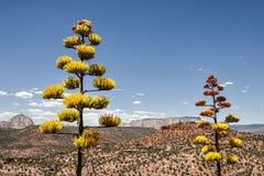 Sedona亚利桑那美国风景  免版税库存图片