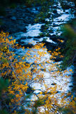 Sedona小河在秋天 库存照片