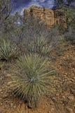 Sedona, Аризона в зиме Стоковое Изображение RF