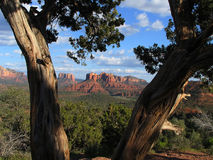 Sedona. Arizona, through a tree Stock Image