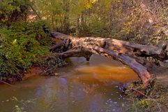 Sedona 7. Old Log Over River,Sedona, Arizona royalty free stock images