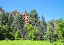 Sedona Arizona forest and rocks Green pine trees, grassy meadow in foreground Stock Photo