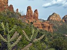 Sedona, Arizona landscape. Cactus plants and the Sedona, Arizona redrock Royalty Free Stock Photography