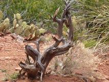 Sedona, Arizona - Mei 2013 Royalty-vrije Stock Foto's