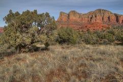 Sedona, Arizona piękne pomarańczowe skały i filary w pustyni fotografia royalty free