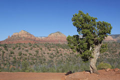 Sedona Arizona Scenic View. A scenic view of red rock formations near sedona arizona Stock Image