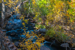 Sedona Arizona USA Fall Colors. As the sun rises it starts to light up the shaded creek Royalty Free Stock Photo