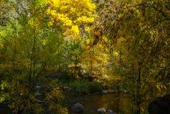 Sedona Arizona USA Fall Colors. Autumn starting along the banks of the creek Stock Image