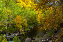 Sedona Arizona USA Fall Colors. Color of the trees reflects on the creek below Royalty Free Stock Photos