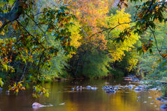 Sedona Arizona USA Fall Colors. The ducks rest in a quiet pond in sedona Royalty Free Stock Photography