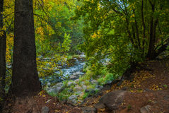 Sedona Arizona USA Fall Colors. The green leaves start to change to the colors of fall Royalty Free Stock Photo