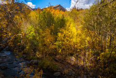 Sedona Arizona USA Fall Colors. A mountain peeks from behind a wall of color Royalty Free Stock Photo