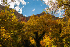 Sedona Arizona USA Fall Colors. A mountain peeks from behind a wall of color Stock Image