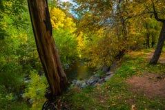 Sedona Arizona USA Fall Colors. Old tree keeps guard over the realm below Stock Image
