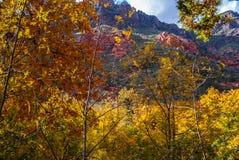Sedona Arizona USA Fall Colors. Red rocks hide behind the wall of color Stock Photos