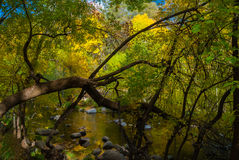 Sedona Arizona USA Fall Colors. Tree branch stretches out over the creek Royalty Free Stock Image