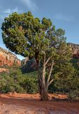 Sedona, bello albero, canyon di Oak Creek, Arizona immagine stock