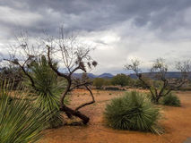 Sedona Desert New Mexico Royalty Free Stock Photography