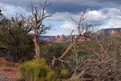 sedona för arizona bildanderock Fotografering för Bildbyråer