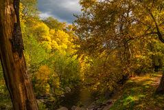 Sedona foliage on a cloudy fall day. Oak creek beneath a canopy of fall color Royalty Free Stock Photography