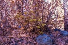 Sedona hermoso Arizona en Sunny Autumn Day Foto de archivo