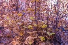 Sedona hermoso Arizona en Sunny Autumn Day Fotos de archivo
